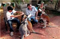 kangaroo orphanage in coober pedy